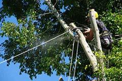福岡市 福岡地区 山林の樹木伐採作業