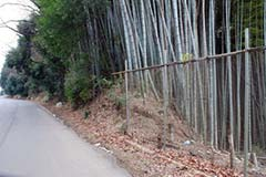 福岡市 福岡地区 竹藪・竹林伐採