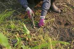 福岡市 一戸建て 一軒家  お庭の草抜き、草むしり