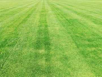 定期芝刈り